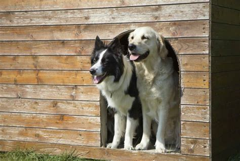 comfortable temperature for dogs how to get your kennel ready for hot weather american