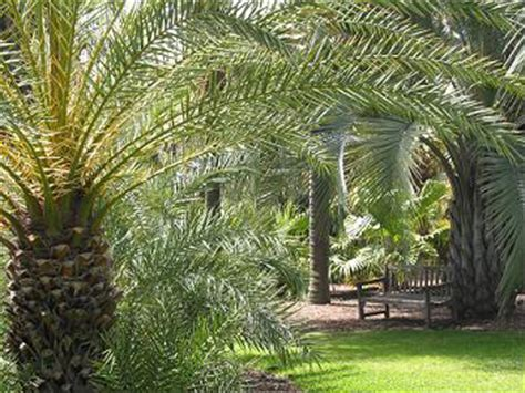 Palm Gardens by Palm Garden
