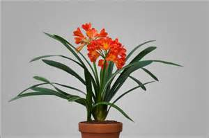 Flower Plants by Blooming Plants Unusual Orange Flower Form