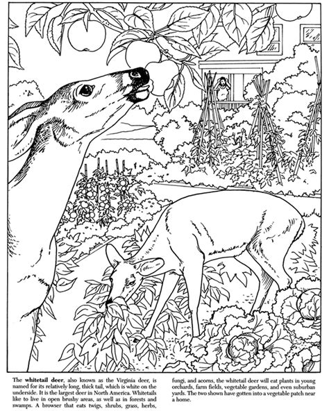free coloring pages of dover