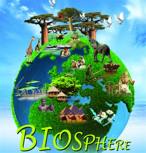 Subway Tile Ideas For Kitchen Backsplash Biology Biosphere Exles Biology Biosphere Exles