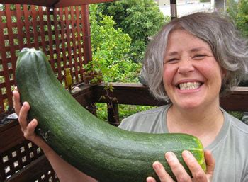 giant zucchini   lazy composter