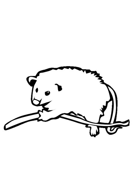 possum colouring pages az coloring pages