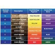 Haircolor Levels Peroxide Developer Lighteners Of Hair