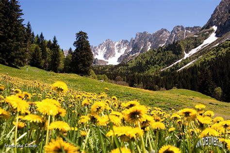 prati in fiore tris di cime ai celli di schilpario cione