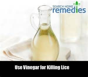 home remedies for lice vinegar 8 killing lice home remedies treatment home