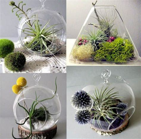109 best images about aeriums on pinterest gardens air plant display and erlenmeyer flask