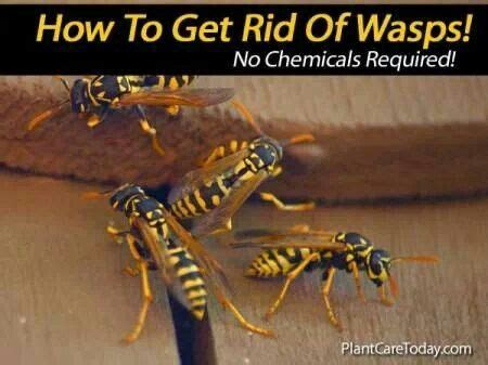 how to get rid of wasps in backyard pin by hope adkins on hopes pinterest