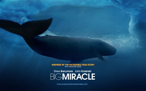 The Miracle Whales Big Miracle Wallpapers 1920x1200 Wallpapers