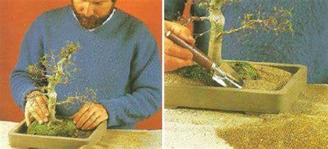 Pot Tanaman Dan Bunga Panjang Sgp tips memilih pot tanaman bonsai bibitbunga