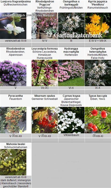 sträucher für den schattigen garten pflanzen schatten garten mit schatten pflanzen welche