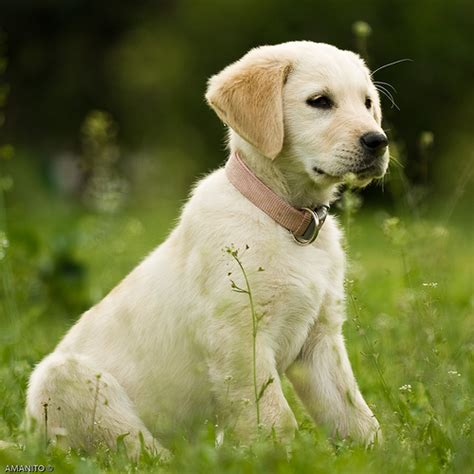 cataract surgery for dogs cost of cataract surgery for dogs ehow uk