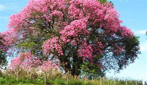 Different Names Of Green by 15 Of The Most Wonderful Trees In The World Wonderslist