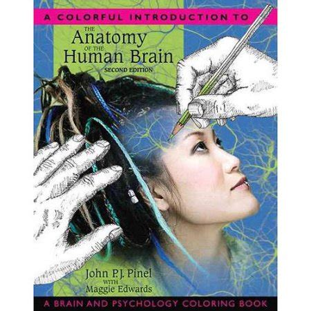 human anatomy coloring book walmart a colorful introduction to the anatomy of the human brain