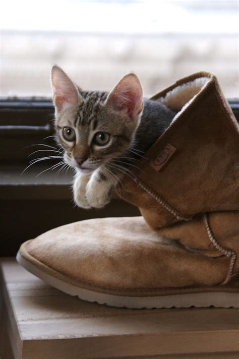 world cat boats any good the cutest cats with boots are ready for anything catster
