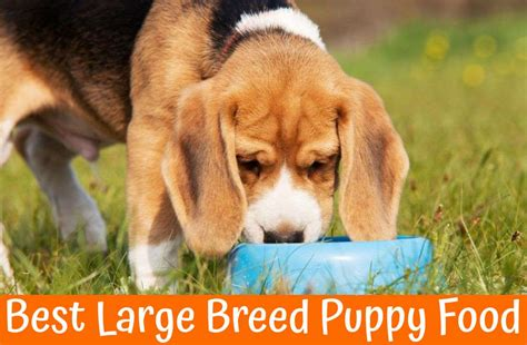 best food for large breed puppies the guide of best large breed puppy food 2017 us bones