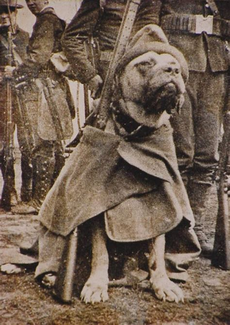 Sergeant Stubby Meet Sgt Stubby The Original War Business Insider