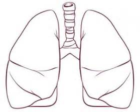 Drawing drawing printout how to draw lungs