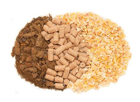 crusca alimento pasto girasole mais e fondo della crusca alimento