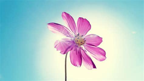 co d fiori hd flower wallpapers 1080p wallpapersafari