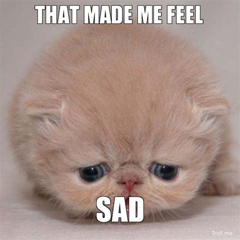 Sadness Meme - sad cat memes image memes at relatably com