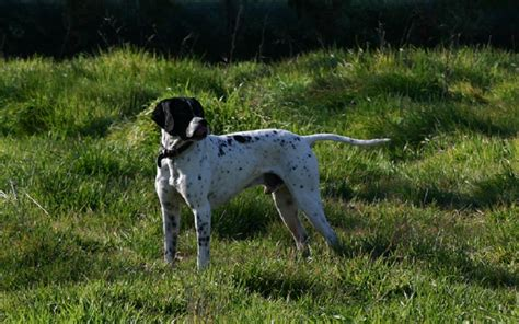 boils on dogs types of epulis in dogs gum boils dogs health problems
