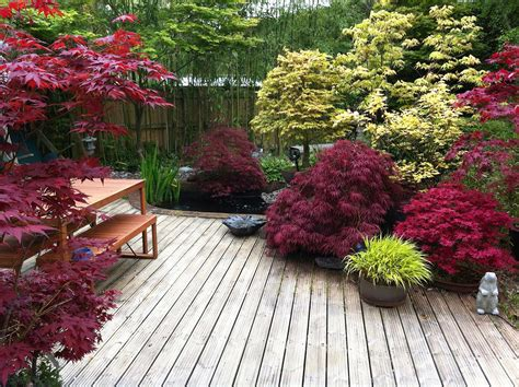 Japanese Maple Garden by Japanese Maples So Many Awesome Colorful Varieties To