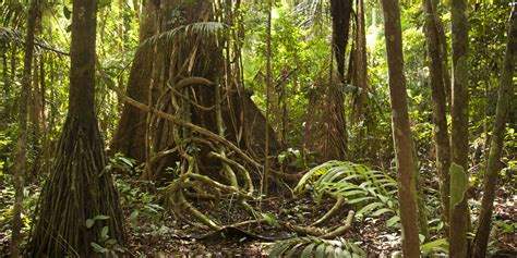 amazon rain forest  drying     climate change huffpost