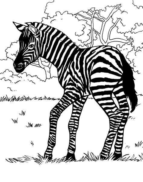coloring book zebra zebra animal coloring book illustrator jess perna