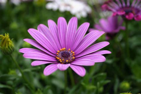 fiori fotografie immagini di fiori 47 foto sfondi hd bonkaday