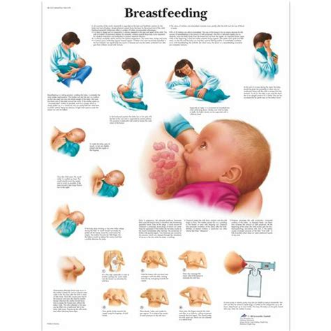 printable breastfeeding poster breastfeeding chart 1001578 vr1557l pregnancy and