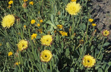 flowers photos 28 images photos of flowers photos of flower gallery asteraceae 800 28
