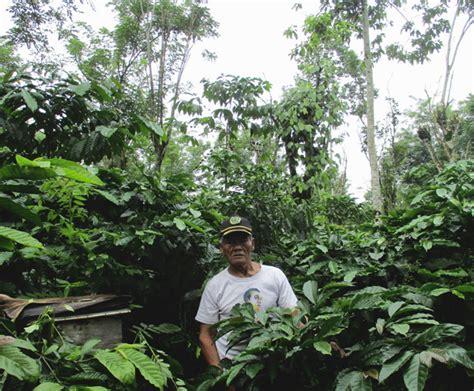 kebun kopi pola agroforestry dan organik diyakini lebih