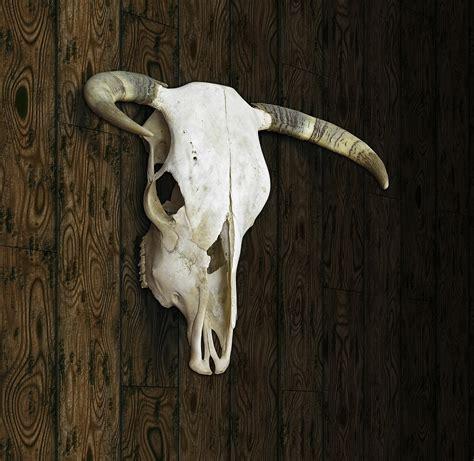 cow skull cow skull digital art by james larkin