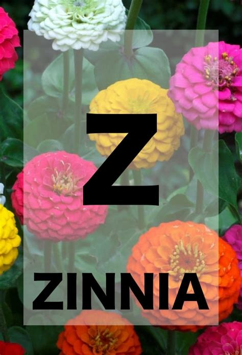 names  flowers  alphabetical order  teach  kiddo