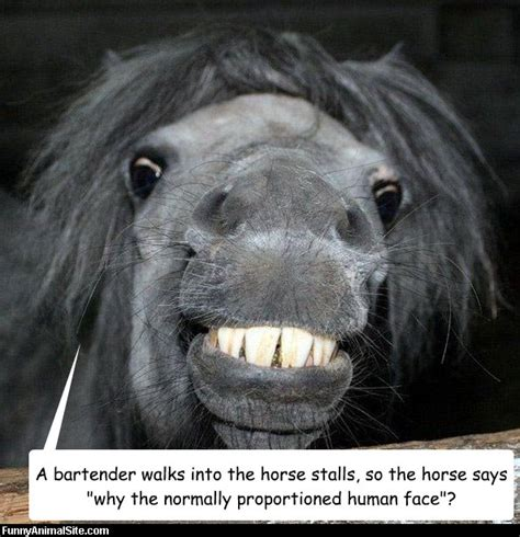 a horse walks into 1910702935 a bartender walks into the horse stalls so the horse says quot why the normally proportioned human