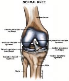 Interior Knee Ligament Arthroscopyarthroscopy Orthopaedics