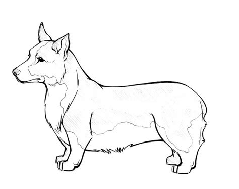 dog breeds coloring pages coloring home
