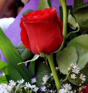 imagenes de flores preciosas firefly a k a cleo ramirez google