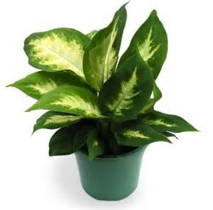 indoor plants no sunlight love plants but no sunlight these plants can be your best buddy top 10 plants nurserylive