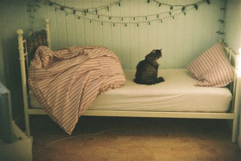 cat bedroom bed bedroom cat christmas light image 314332 on