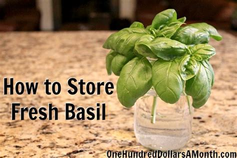 how to store fresh basil one hundred dollars a month