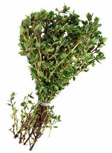 harvesting thyme and how to thyme