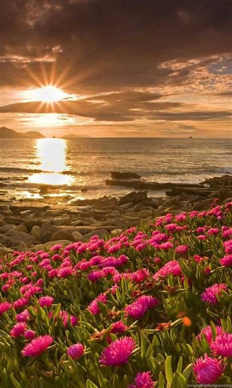beautiful flower scenery hd wallpapers  desktop desktop