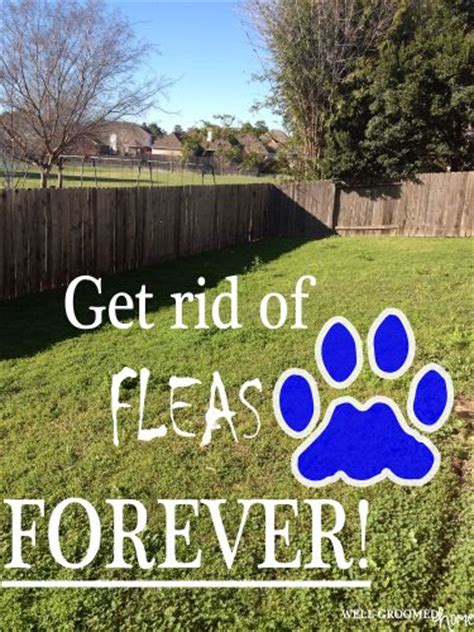 get rid of fleas naturally in your yard diy pest