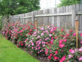 Knockout Roses Landscape Ideas 25 Best Ideas About Landscaping Along Fence On