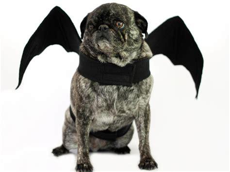 diy bat wings halloween dog costume  tos diy