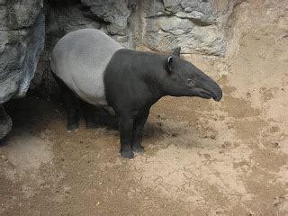 Mouse Di Malaysia lihatlah apa yang terjadi pada bumi kita haiwan haiwan