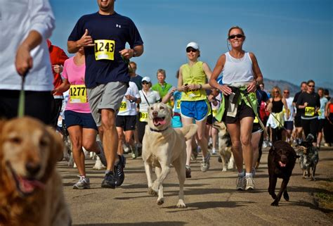 running with your the vet explains how to run with your safely
