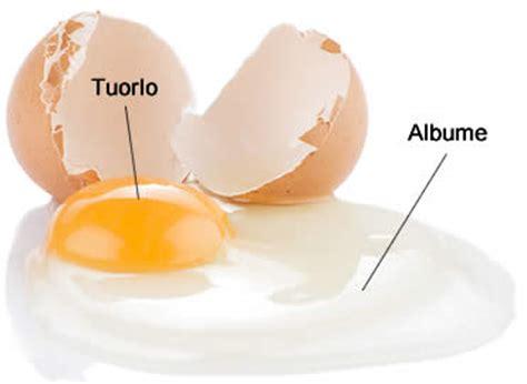 cucinare albume d uovo chiara d uovo